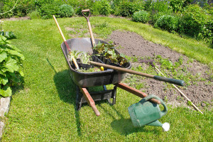 Backyard Landscaping – Terra Landscaping Punta Gorda FL